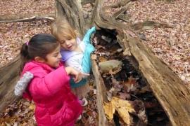 "Preparing a ""Bug Village"" in a fallen log."