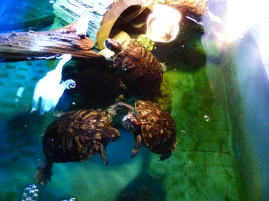 Too bad the turtles are so big.